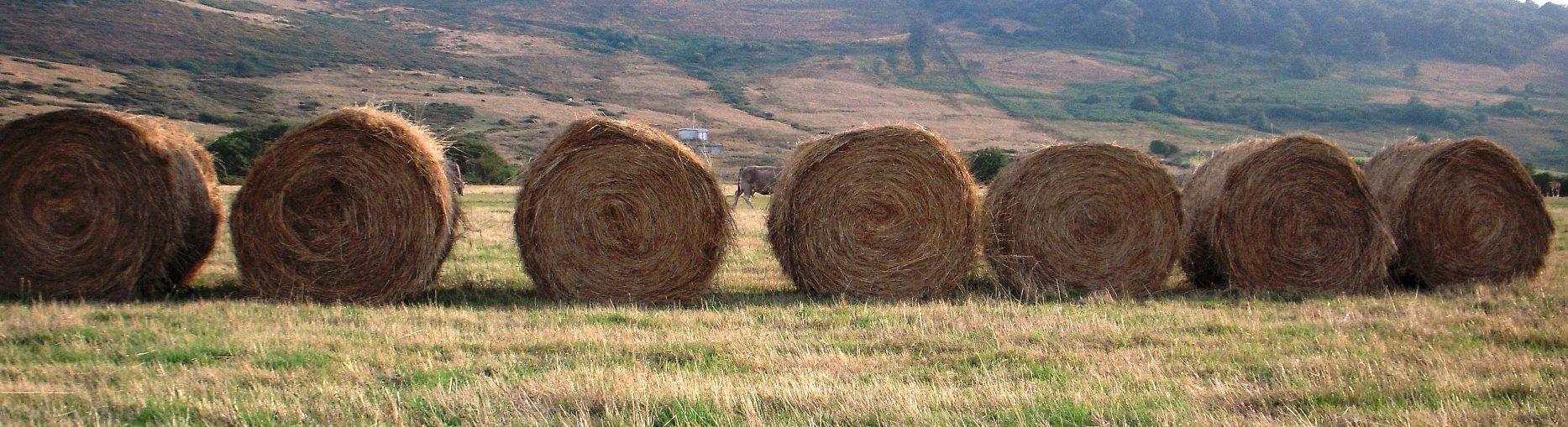 plan_de_ordenacion_rural